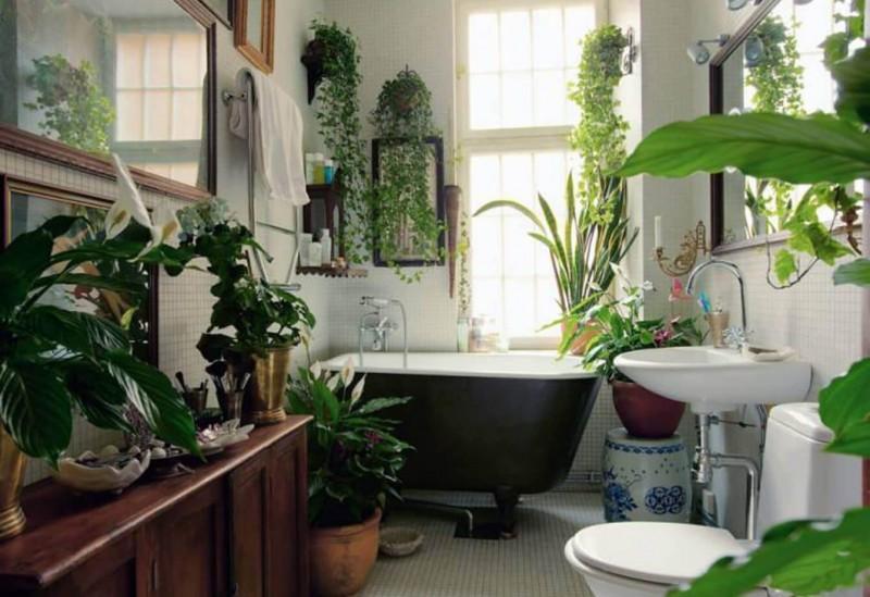 Adauga plante decorative in casa ta in cele mai neasteptate locuri