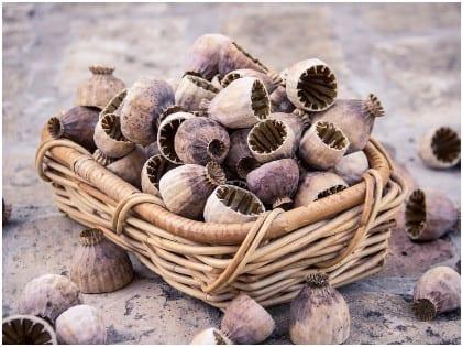 Beneficiile nutritionale ale semintelor de mac de care probabil nu stiati