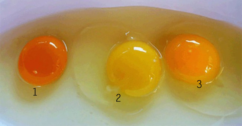 Ce iti poate spune culoarea unui ou despre gaina?