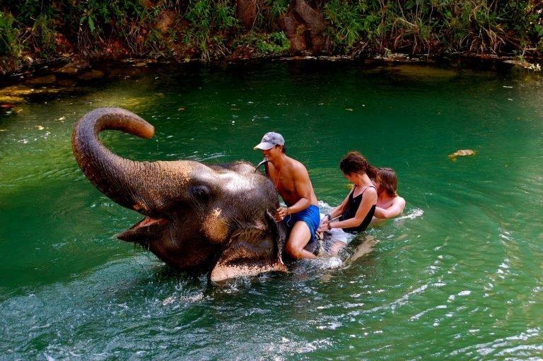 Elefanti in cultura asiatica si de ce oameni ii protejeaza