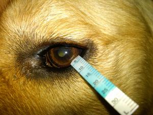 KCS sau sindromul ochiului uscat