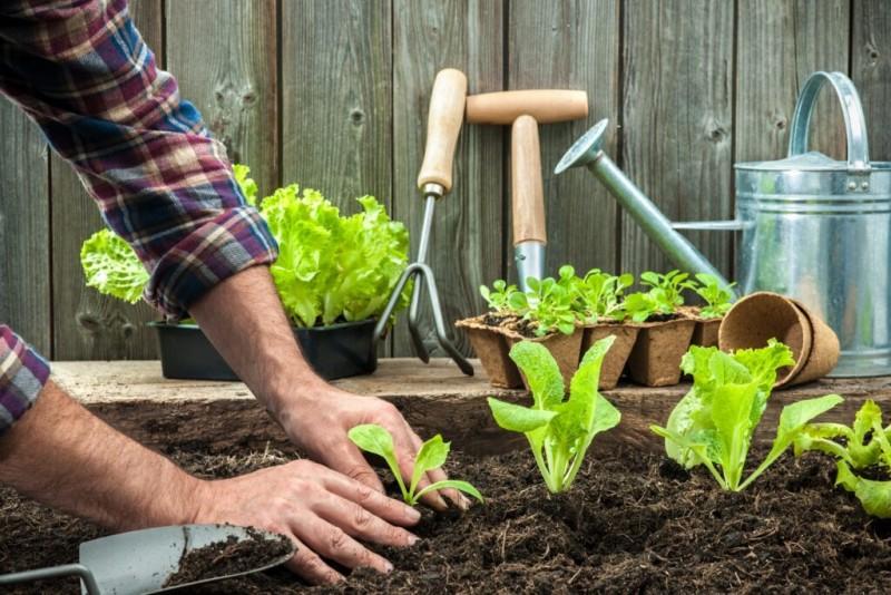 Motive pentru care ar trebui să începeți grădinăritul