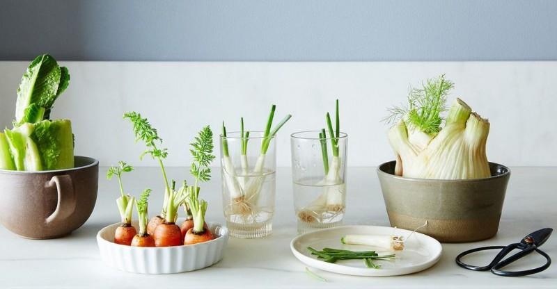 Radacini de legume cu care poti sa gatesti senzational