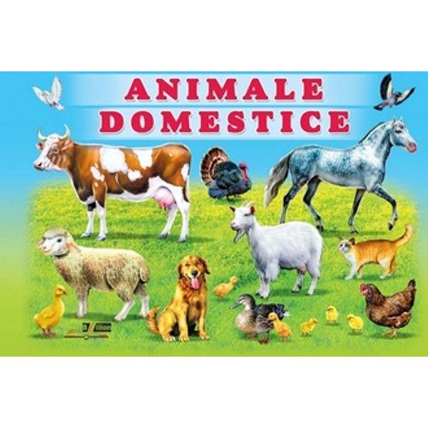 Reactiile copilului la ilustrate cu animale