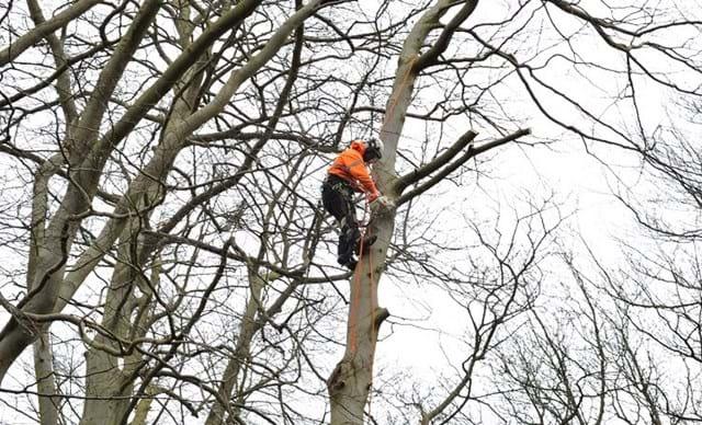 Taieri Arbori periculosi - o necesitate in oras?