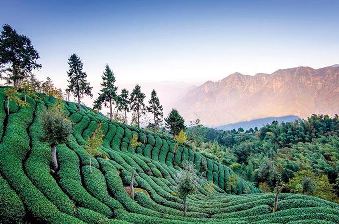 Taiwanul îi ispitește pe turiști cu ceai