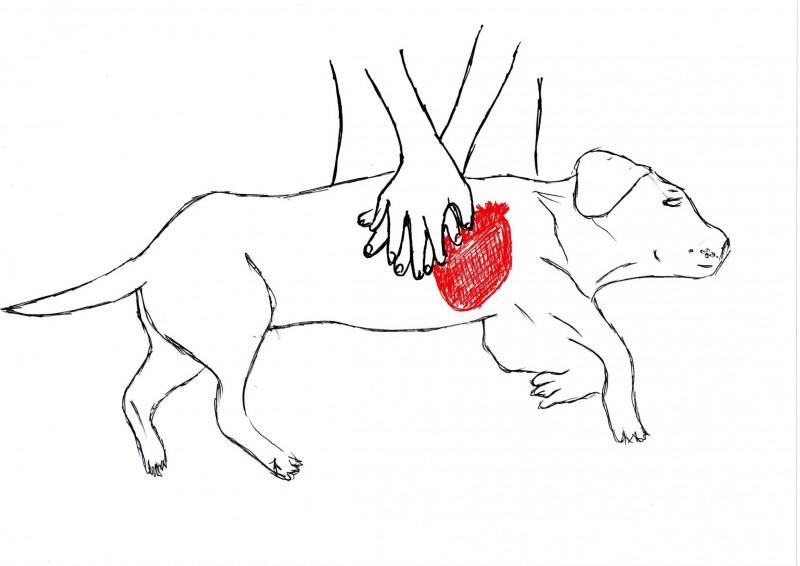 clinica veterinara Supervet